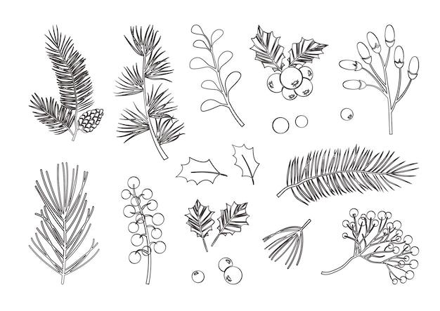 크리스마스 벡터 식물, 홀리 베리, 크리스마스 트리, 소나무, 잎 가지, 휴일 장식, 흰색 배경에 고립 된 겨울 기호. 블랙 라인 아트. 빈티지 자연 그림
