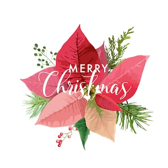 Christmas winter poinsettia flower card or background with place for your text