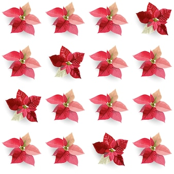 Christmas winter poinsettia flowers seamless background, floral pattern print