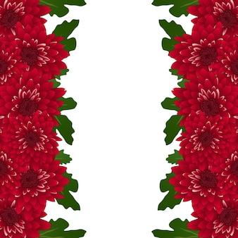 Chrysanthemum flower border