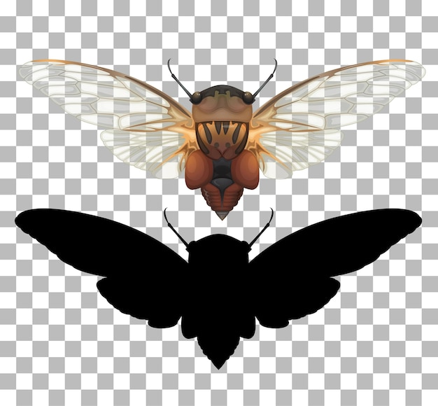 Cicada on transparent background