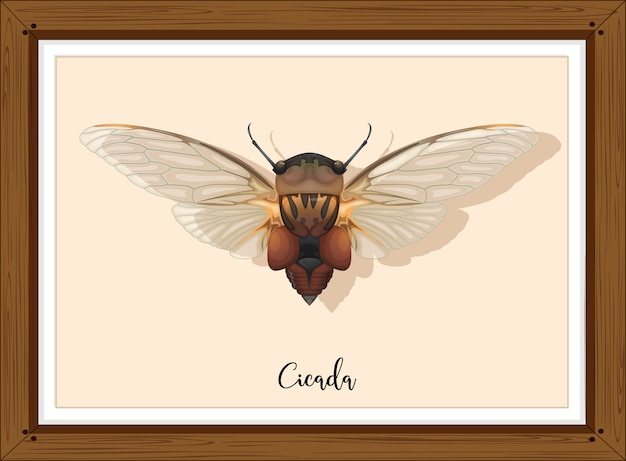 Cicada on wooden frame