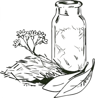 Cinchona bark vector illustration. blooming flowers and  leaves, bottle with dry herbs