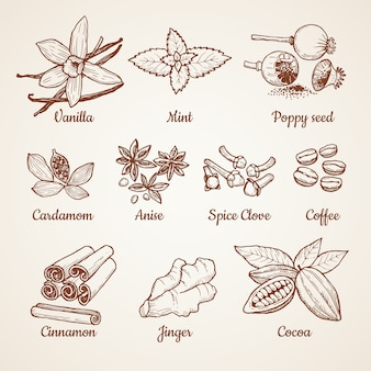 Cinnamon, chocolate, lemon and other kitchen herbs. hand drawn illustrations. aroma clove and anise, spice poppy, mint and vanilla vector