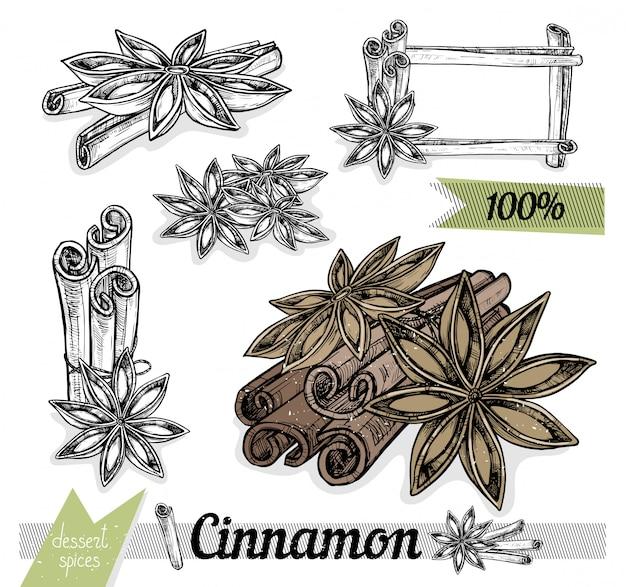 Cinnamon and star anise vector isolated