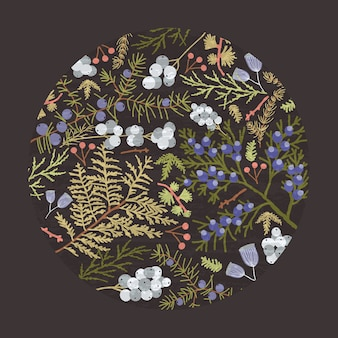 Circular botanical decorative design element with forest coniferous tree branches, juniper sprigs and ferns