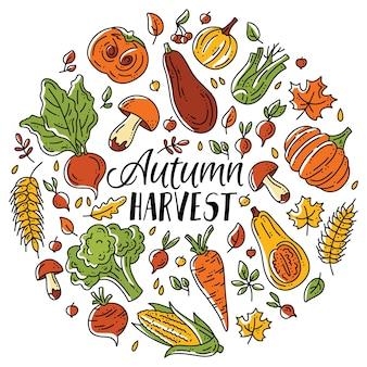 가을 수확을 위한 원형 야채와 버섯 세트