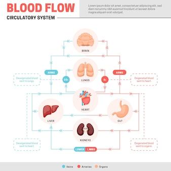 Infografica del sistema circolatorio