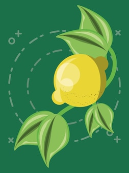 Citric fruits design with branch and leaves with lemon