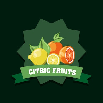 Citric fruits design with decorative frame and ribbon
