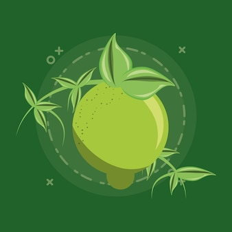 Citric fruits design with lemon with leaves