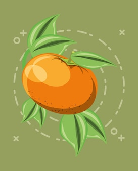 Citric fruits design with tangerine and leaves icon
