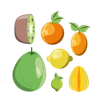 Citric fruits icon set