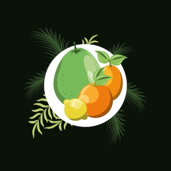 Citric fruits over white circle with tropical leaves