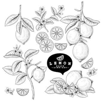 白で隔離される柑橘系の果物のレモン装飾セット