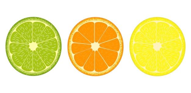 Citrus fruit slices icon