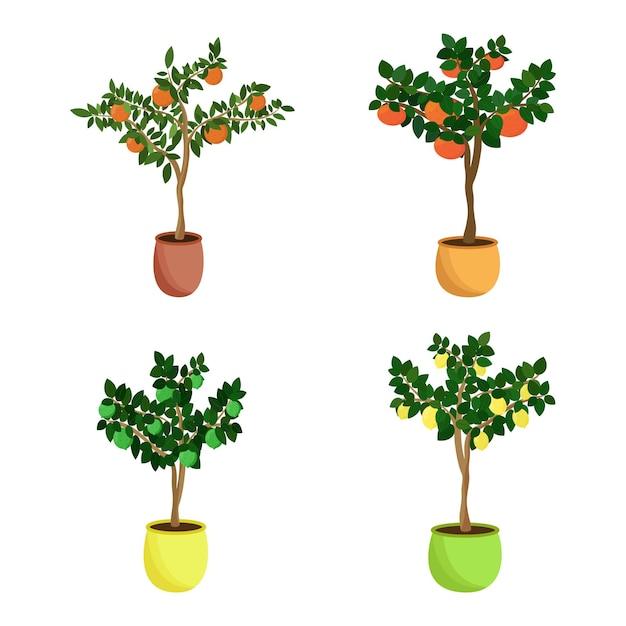 柑橘系の果樹セット。植木鉢にタンジェリン、グレープフルーツ、レモン、ライムの家庭用苗木。ベクトルイラスト。
