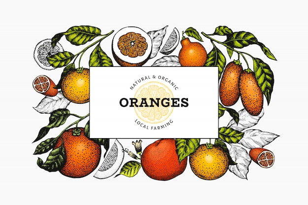 Citrus fruits design template. engraved style frame. vintage citrus banner.
