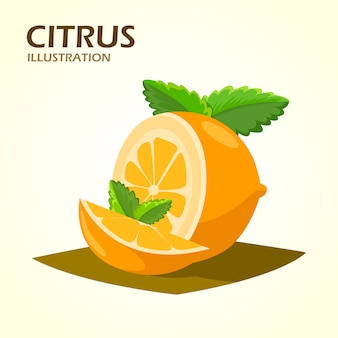Citrus fruits halves and quarter wedges realistic icon