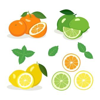 柑橘系の果物セット。明るい黄色のレモン、グリーンライム、オレンジオレンジ、半分とくさび、ミントの葉。おいしいヘルシースナック。夏と春の食べ物のアイコン。ベクトルイラスト