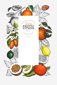 Citrus fruits template. hand drawn colour fruit illustration.