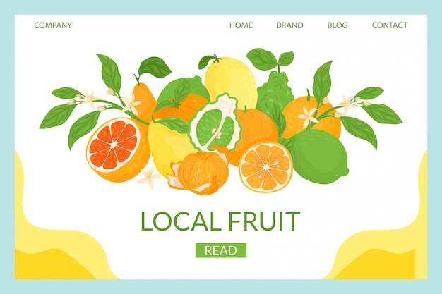 Citrus local landing  illustration. close-up composition fresh tropical fruits. ripe juicy grapefruit, sweet orange, sour lemon natural antioxidant. vitamin c to improve health.