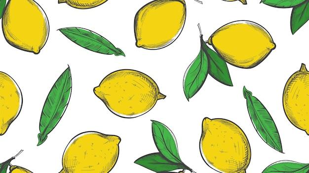 Citrus sketch pattern. summer lemon background.
