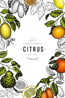 Citrus template. hand drawn color fruit illustration.