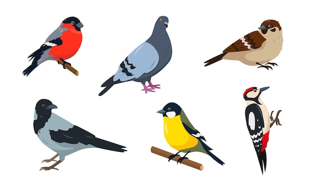 City birds set. bullfinch, sparrow, tit, woodpecker, pegeon and crow. birds in different poses