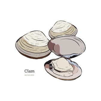 Clams, mussels, seafood, sketch style vector illustration.