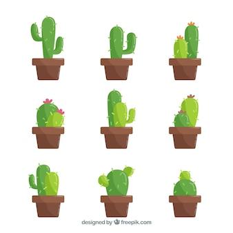 Classic cactus with flat design