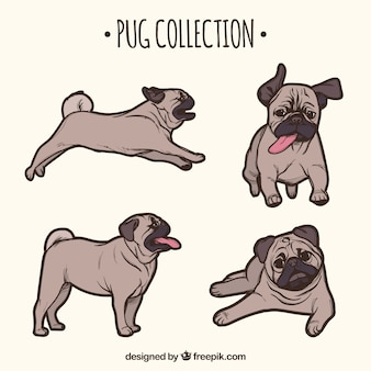 Classic pack of hand drawn pugs