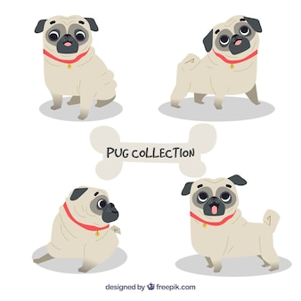 Classic pack of lovely pugs