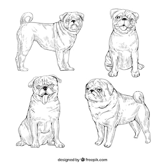 Classic pack of sketchy pugs