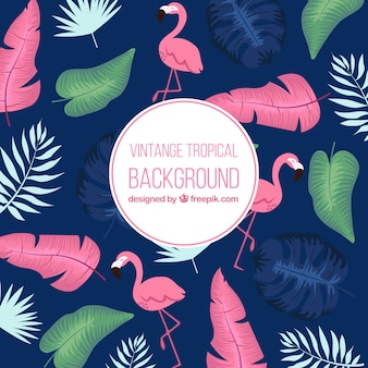 Classic tropical background with vintage style