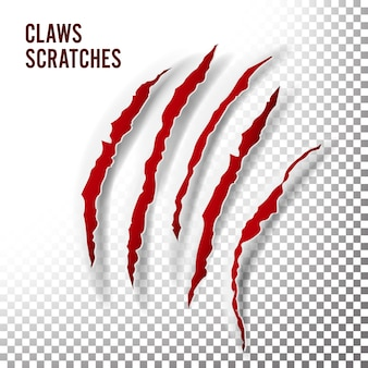 Claws scratches