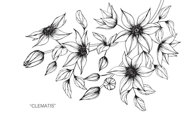 クレマチスの花を描くイラスト