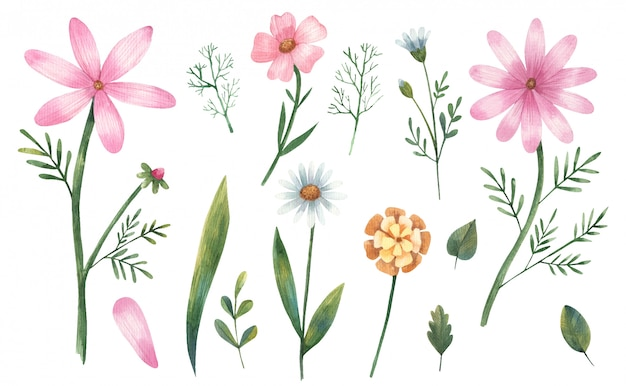 クリップアートの花、ピンクのヒナギク、葉、白い背景の上の枝水彩イラスト
