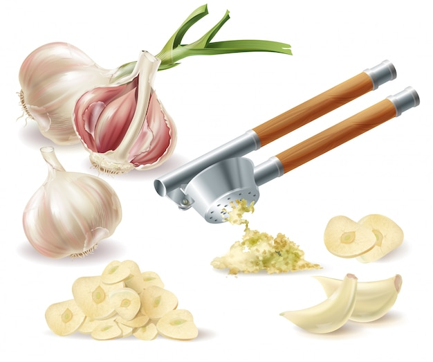 Clipart with sprouted head of garlic, peeled cloves, chopped slices and metal press