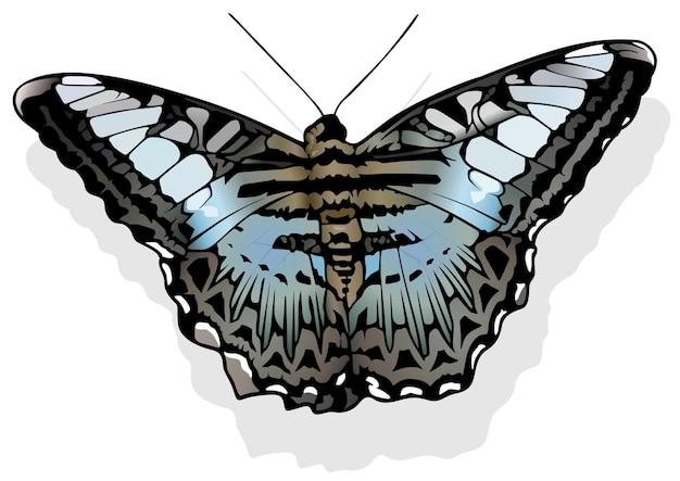 Клипер бабочка парфенос сильвия