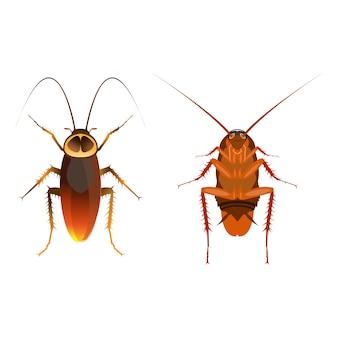 Close up cockroach image
