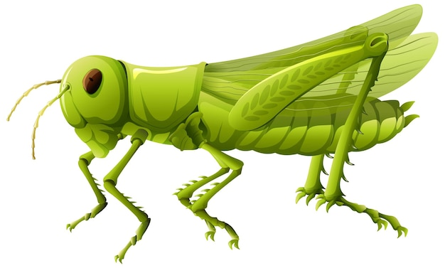 Close up of grasshopper in cartoon style