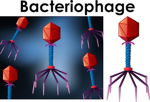 ウイルスバクテリオファージの孤立したオブジェクトを閉じる