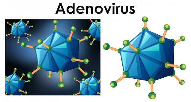 Close up isolated object of virus name adenovirus