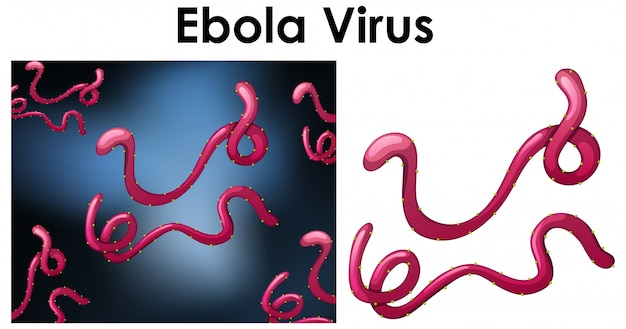 Close up isolated object of virus named ebola virus