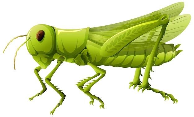 만화 스타일에 메뚜기의 클로즈업