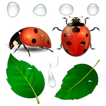 Close-up realistic ladybugs, water drops and leaves .  template, cliparts of spring symbol icons. .