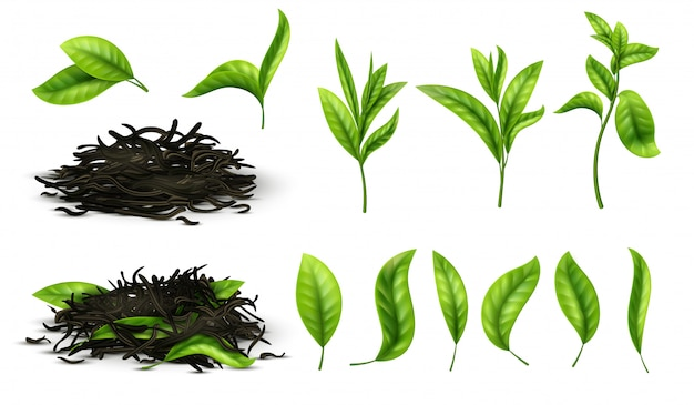 Close up realistic tea dried herbs and greens tea leaves isolated  set