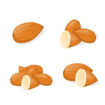 Макрофотография миндаля вектор здоровое питание мультфильм иллюстрации. группа орехов изолированы
