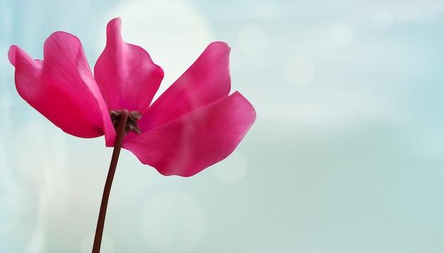 Closeup of flower on bokeh light background